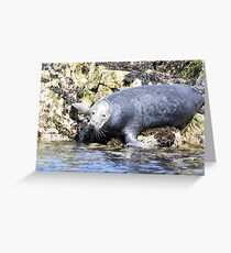 Farn island wildlife Greeting Card