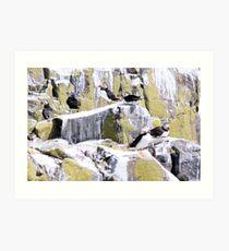 Farne Rocks Art Print