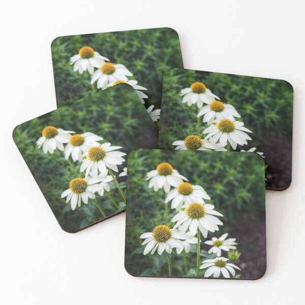 Field of Daisy Flowers  Coasters (Set of 4)