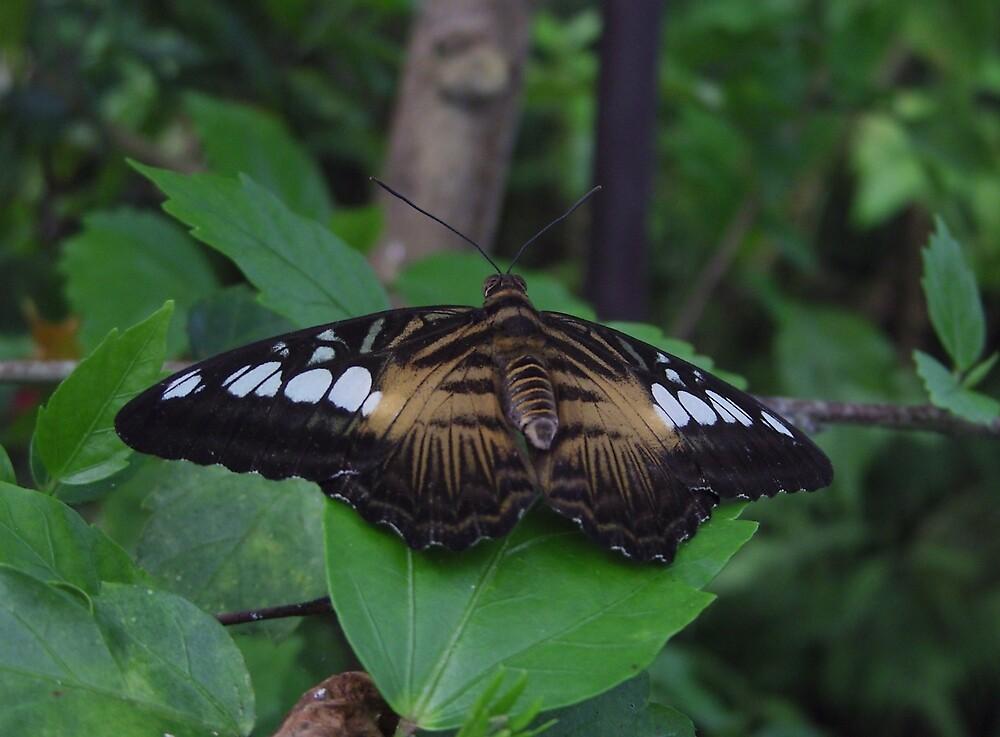 Butterfly by Jonathan Wicks