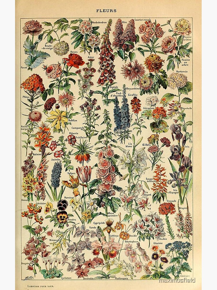 vintage flowers poster by maximusfield