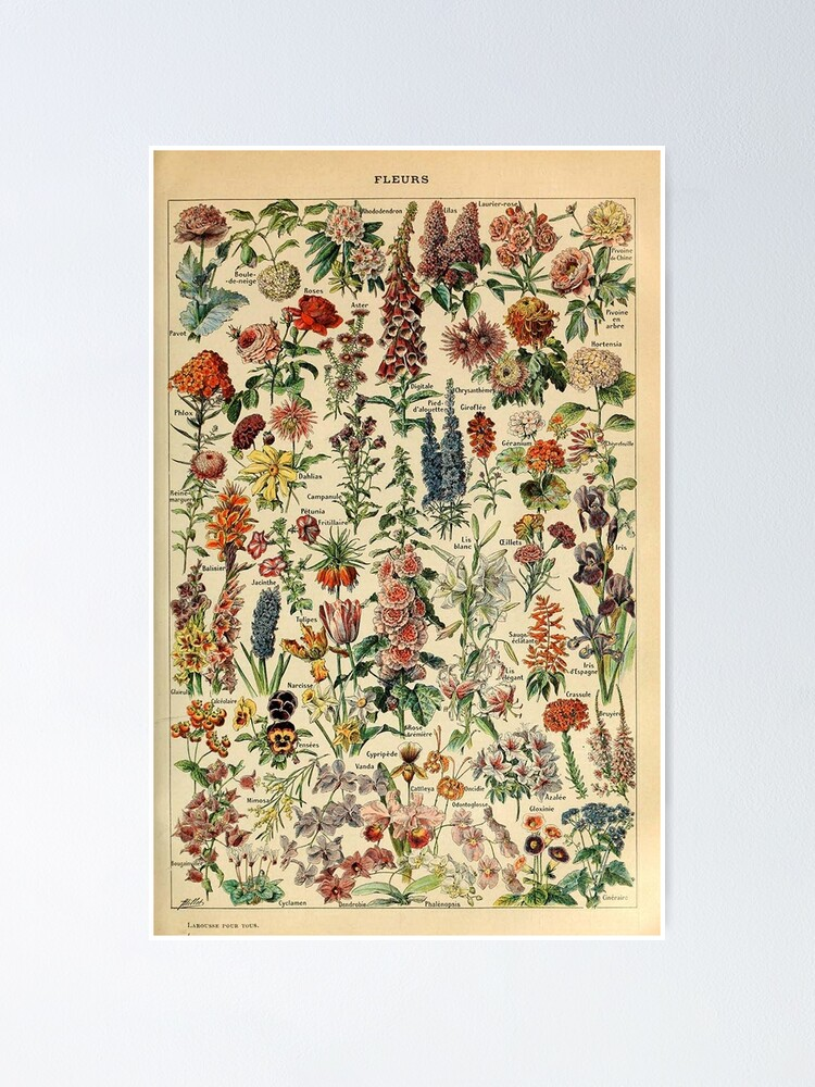 Alternate view of vintage flowers poster Poster
