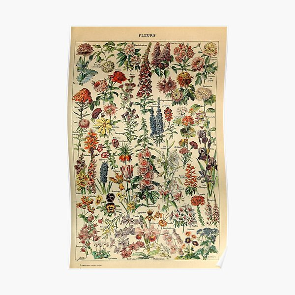 vintage flowers poster Poster