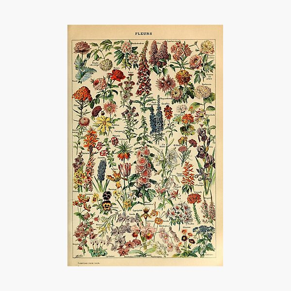 vintage flowers poster Photographic Print