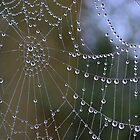 Another Web Shot by relayer51
