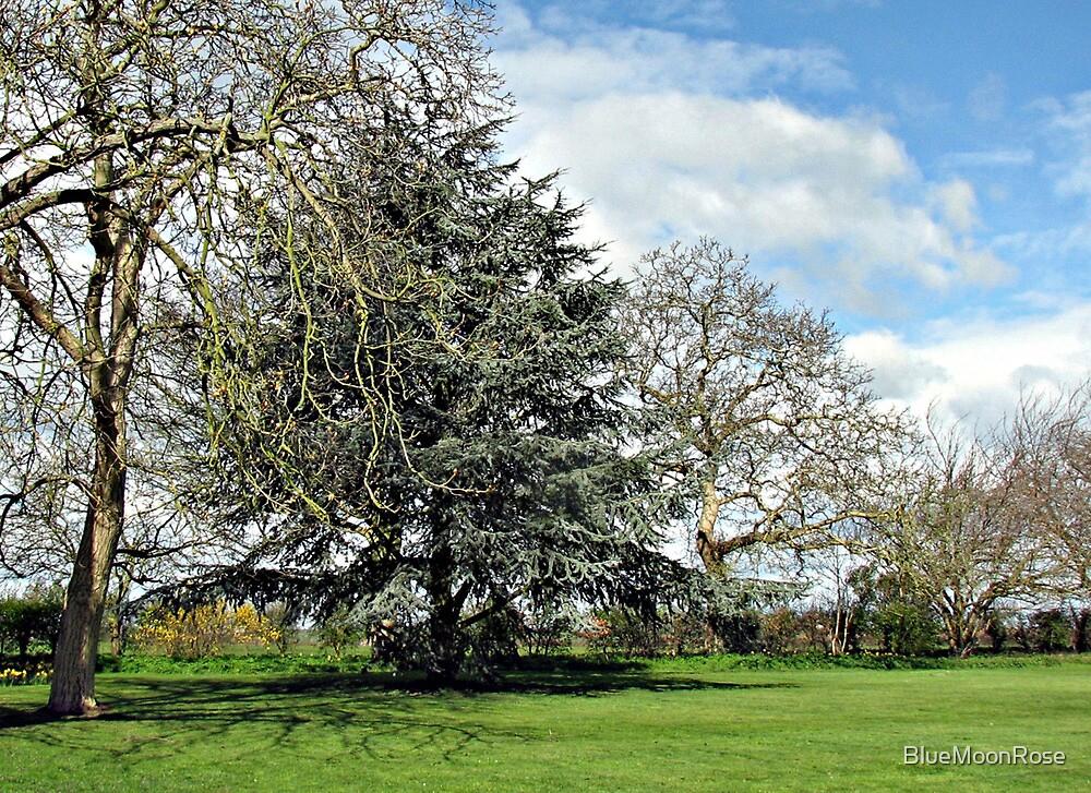 Trees in Winter - New Moor Farm von BlueMoonRose