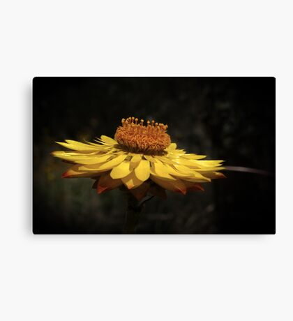 wildflower weekend Canvas Print