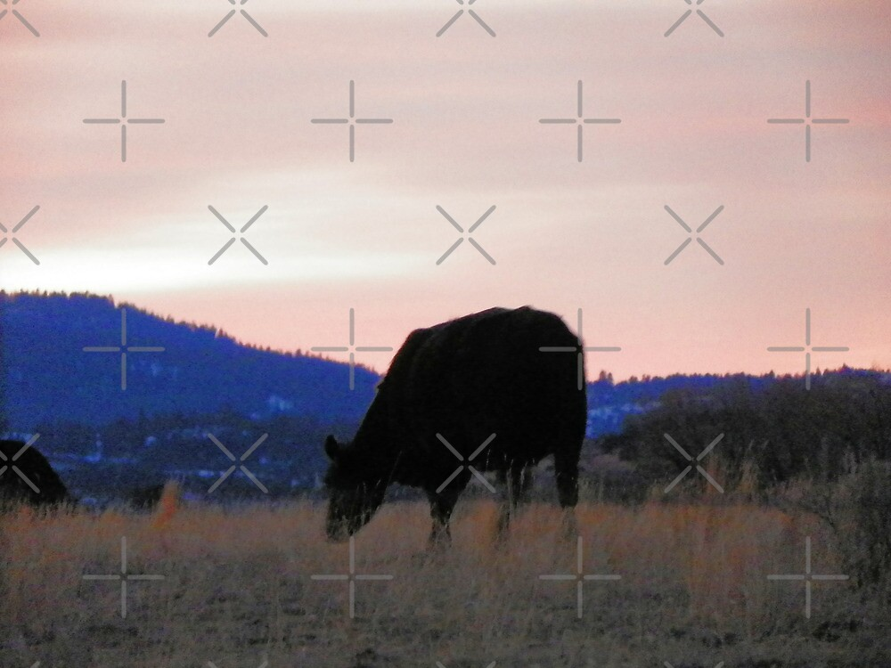 Sunset Cow by Betty  Town Duncan