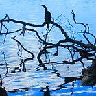 cormorant silhouette by Anthony Goldman