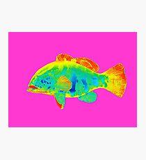 abstract fish Photographic Print