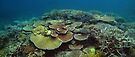 Mac's Reef I by Reef Ecoimages