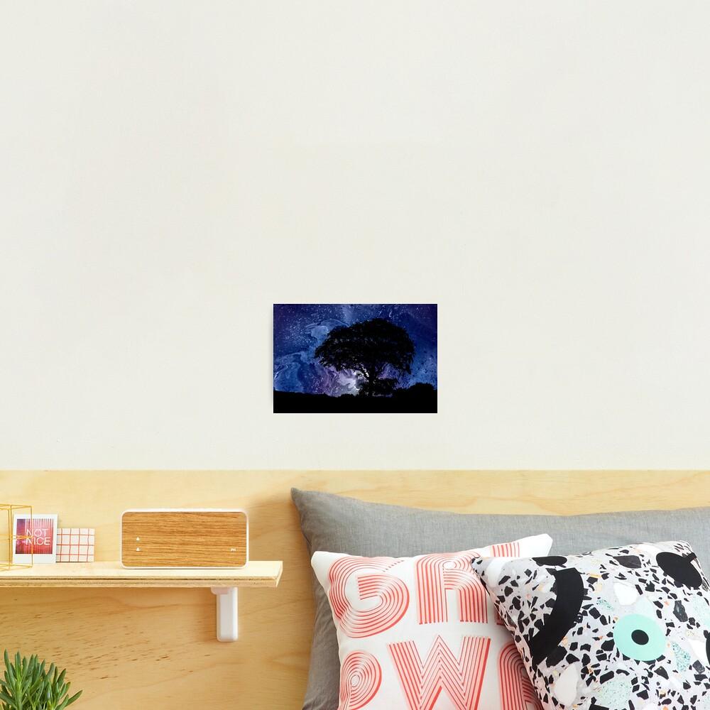 Nightfall: Twilight scenery, trees, sky, stars Photographic Print