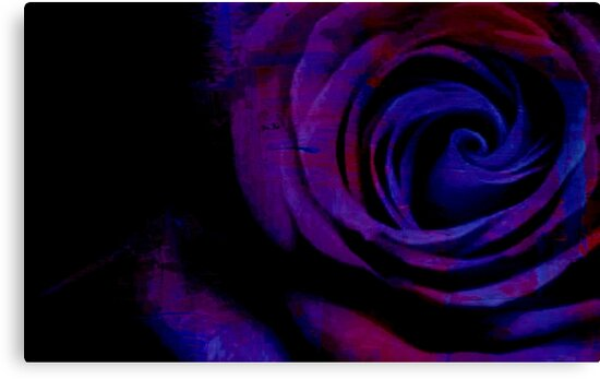 Close Up Of A Rose - Digitally Manipulated Photography by avalonmedia
