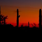 Cacti in the Red by Tracy Riddell