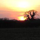 Sunset over Dorset Field by Songwriter