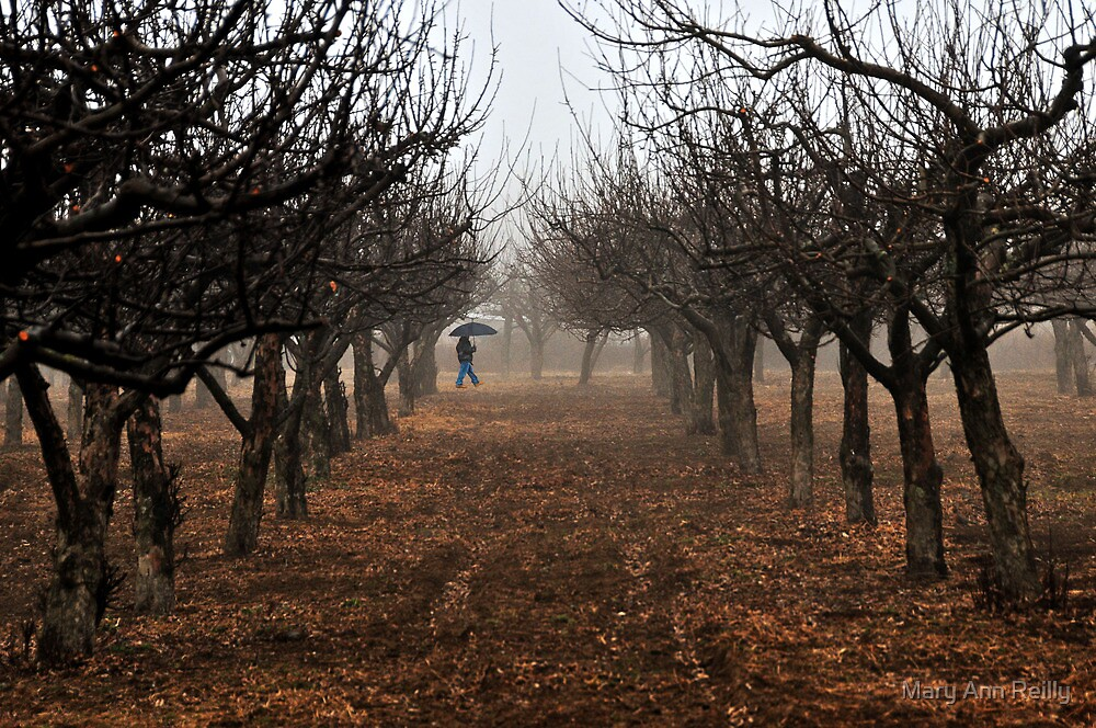 Out Walking in the Orchard by Mary Ann Reilly