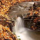 Autumn Stream by Jeff Palm Photography