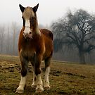 Horses in the Field by Mary Ann Reilly