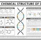 The Chemical Structure of DNA by Compound Interest