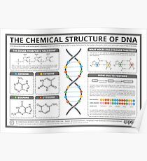 The Chemical Structure of DNA Poster