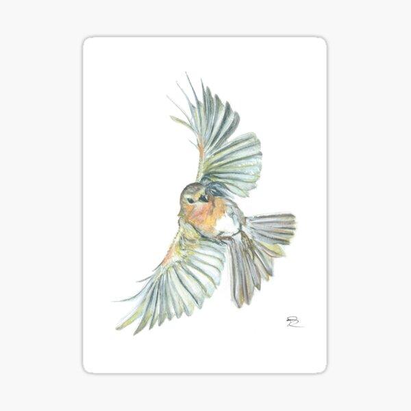 Robin in Flight Sticker