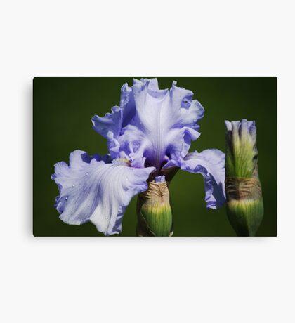 Iris & Buds Canvas Print