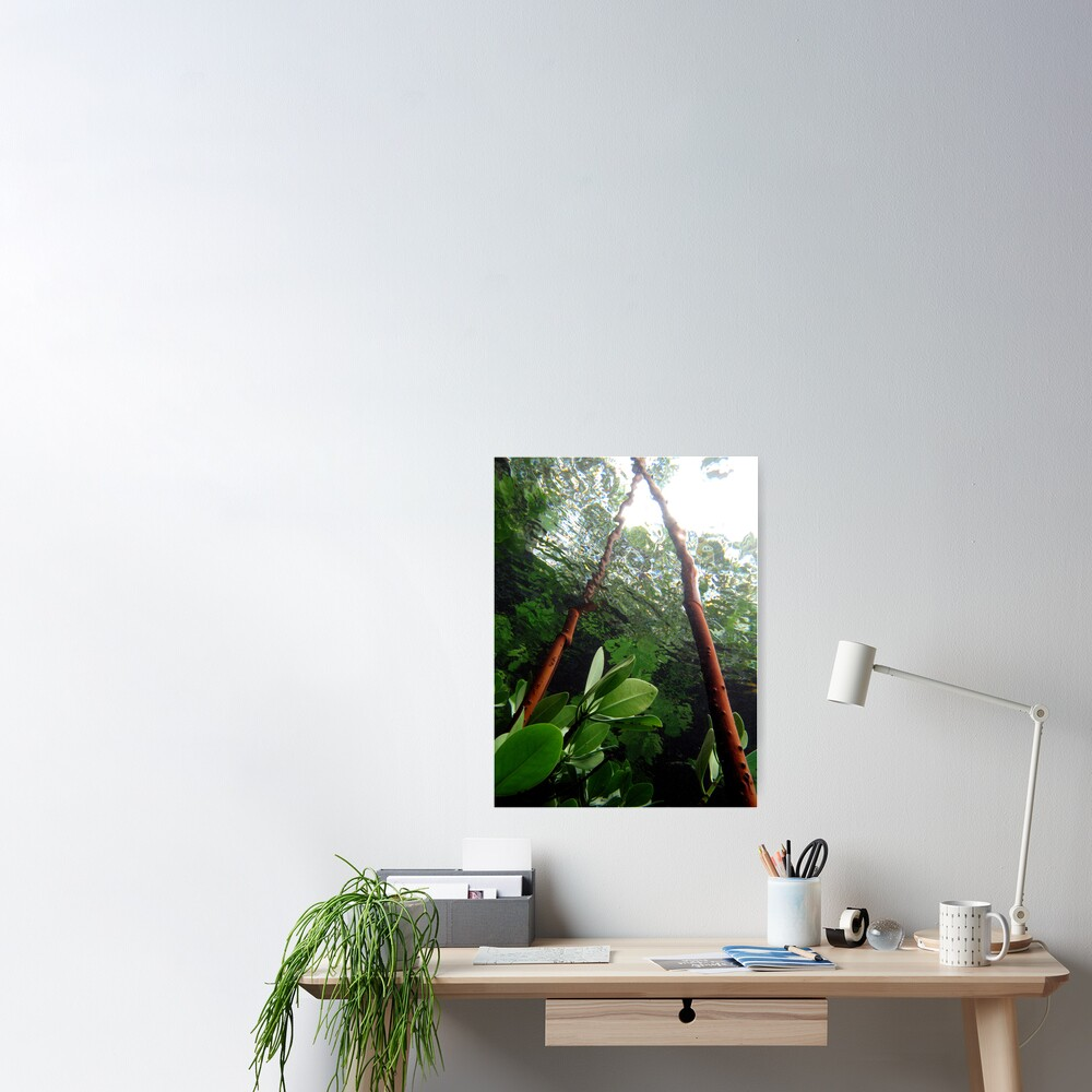 A-frame in Mangrove Poster
