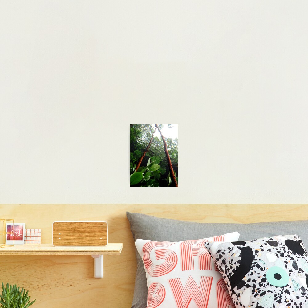 A-frame in Mangrove Photographic Print