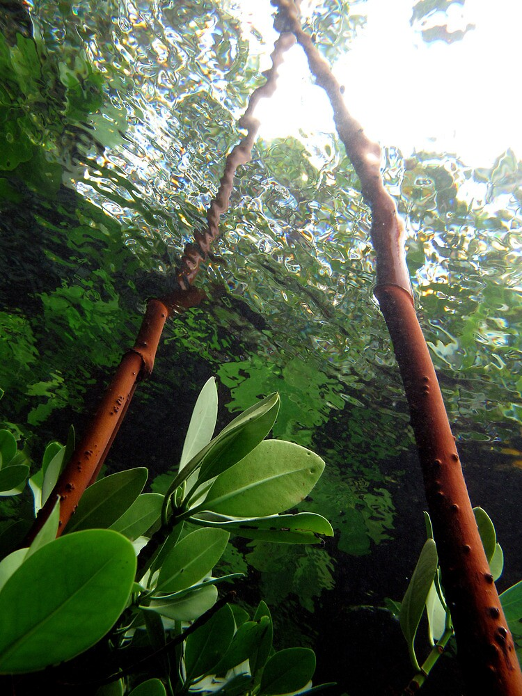 A-frame in Mangrove by neoniphon