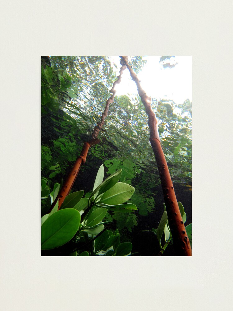 Alternate view of A-frame in Mangrove Photographic Print