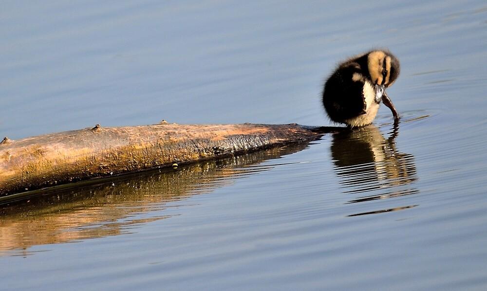 The last Ducking  by Helen J Cherry