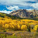 Colorado Rocky Mountain Fall Foliage  by Bo Insogna