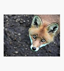 Look into those eyes Photographic Print