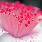 Raspberry Crush by Astrid Ewing Photography