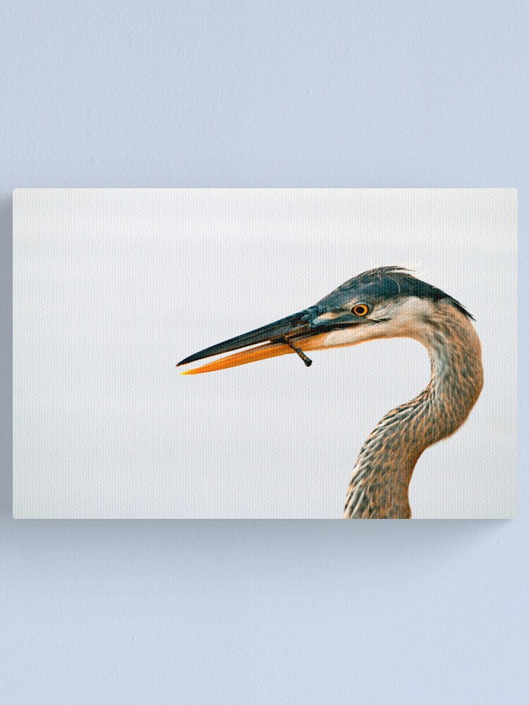 Alternate view of Blue Heron Portrait Canvas Print