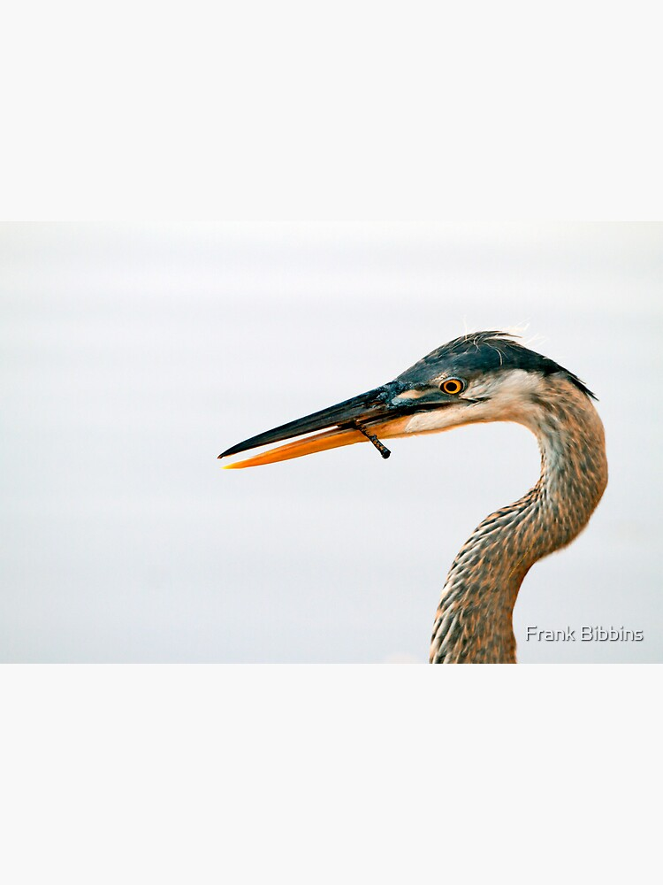Blue Heron Portrait by organicman2