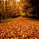 Carpet of Autumn at Stover Country Park, Newton Abbot by Jay Lethbridge