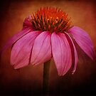 Textured Echinacea by Chris Ferrell