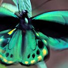 Butterfly by Glennis  Siverson
