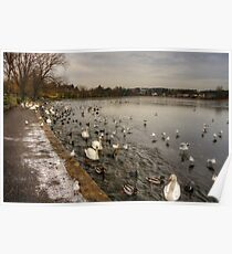 Winter Wildfowl Poster