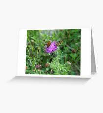 SKIPPERS IN THISTLE Greeting Card