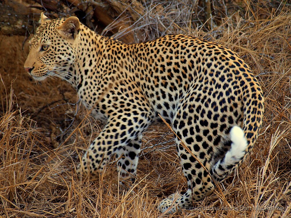 Let the hunt begin by Explorations Africa Dan MacKenzie