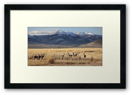 Field of Deer by ZenCowboy