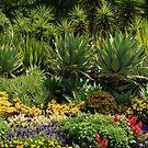 Fitzroy Gardens, melbourne by simonecoleman