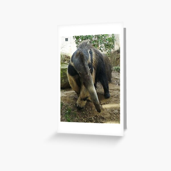 Anteater takes a bow Greeting Card
