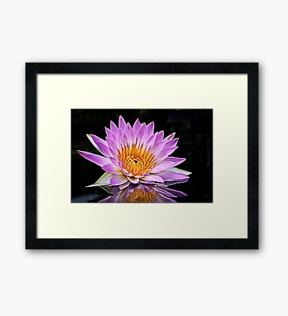 Pink Water Lily, Reflecting Framed Print