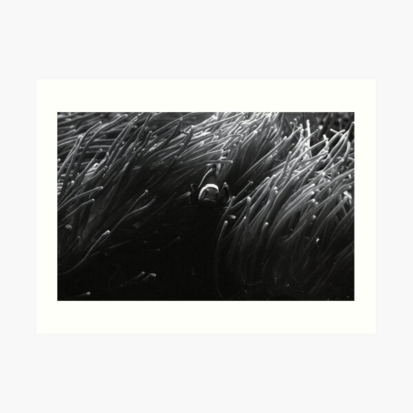 Anemonefish Art Print