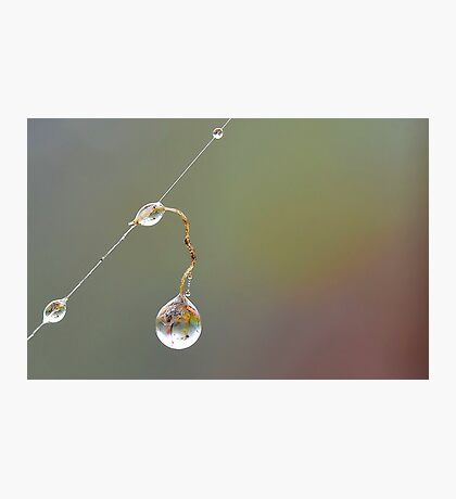 Hanging Droplet Photographic Print