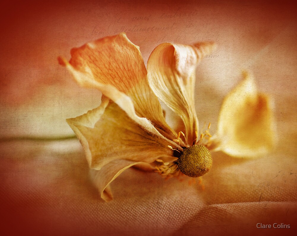 beauty in dying by Clare Colins