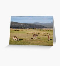 Kangaroos at Narawntapu Greeting Card